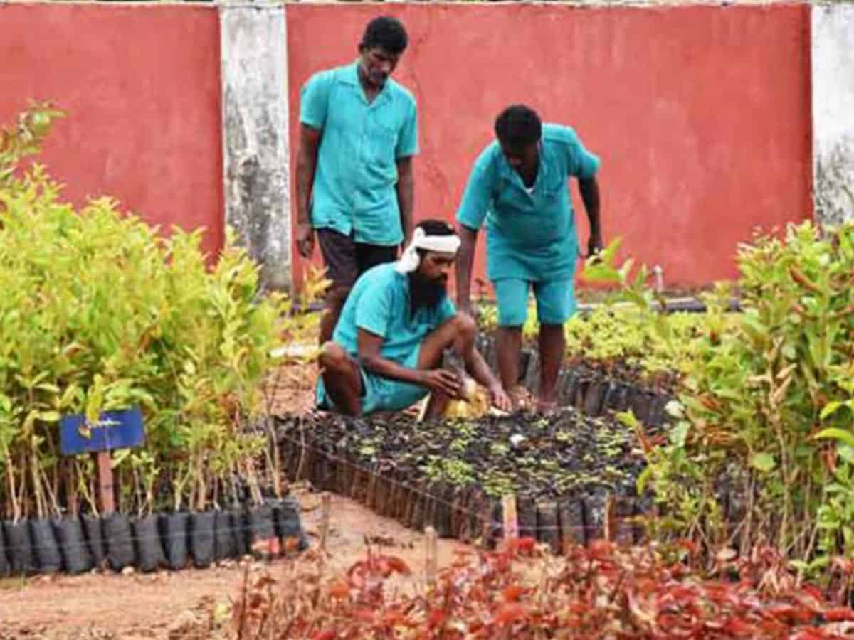 India's biggest plant nursery in jail takes root in Telangana