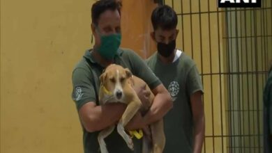 Photo of Lucknow civic body sterilizes, tags stray dogs