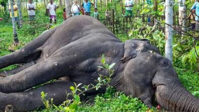 Photo of Elephant calf electrocuted to death in Bengal