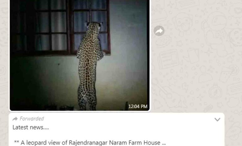 Fact Check: Was a leopard-spotted in Rajendranagar?