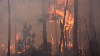 Photo of California wildfire destroys several homes, thousands evacuated