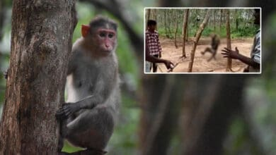 Photo of Three held for hanging monkey to death in Telangana