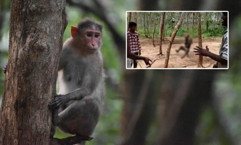 Three held for hanging monkey to death in Telangana
