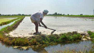 Photo of Chhattisgarh disburses Rs 1,737 cr to farmers, tendu leaf collectors
