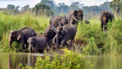 Photo of Tripura has 47 elephants: Official