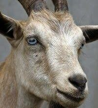 Photo of Qurbani (Udhiya) Spirit / Virtue / Dua'a