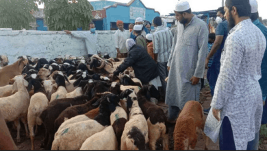 Photo of Pandemic hits goat markets of Hyderabad
