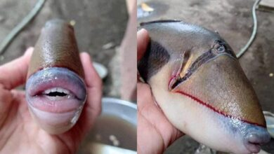 Photo of A fish with human-like features sets twitter on fire