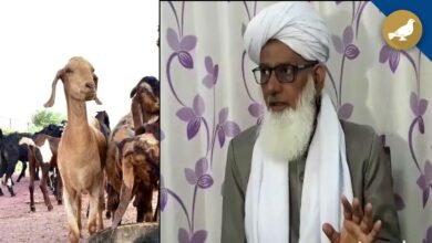 Photo of No other act can substitute 'Qurbani': Maulana Mufti Khaleel Ahmed