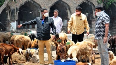 Photo of Sheep and goats being sold at Purana Pul