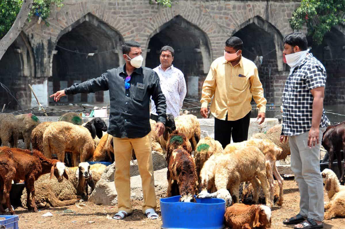 Sheep and goats being sold at Purana Pul