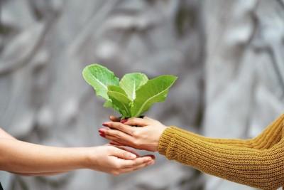 Samantha Akkineni: Gardening is a game changer