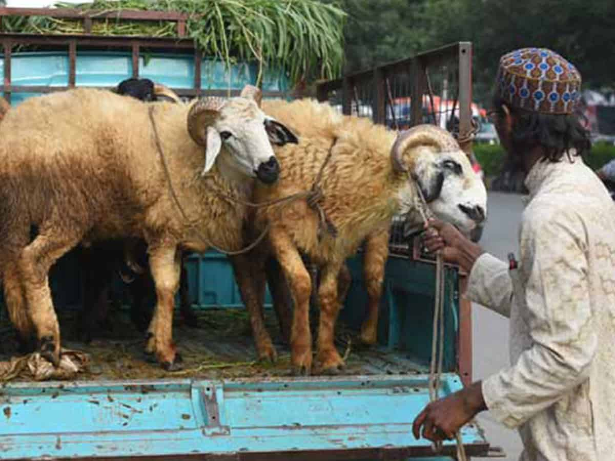 Online sale, outsourced Qurbani to make it a different Eid in Hyderabad