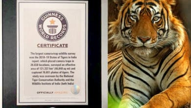 Photo of India's 2018 Tiger Census makes it to Guinness Book of World Records