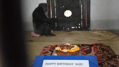 "Photo of 34th Birthday celebration of Chimp ""SUZI"" at Nehru Zoological Park"