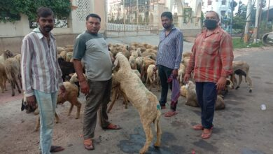 Photo of Goats arrive at markets for Bakr-Eid, but no takers