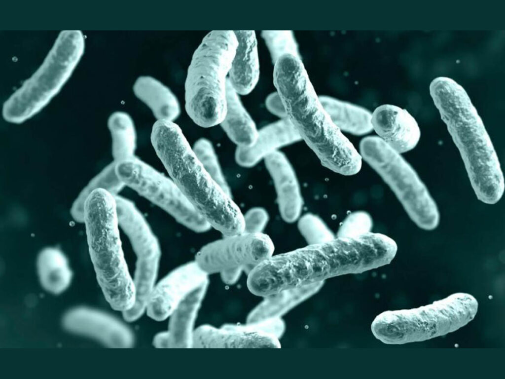 Bubonic plague case confirmed in Mongolia