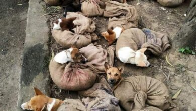 Photo of After hullabaloo, Nagaland  bans dog meat trade, consumption