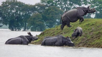 Photo of Assam's Kaziranga park flooded, 51 animals killed, 102 rescued