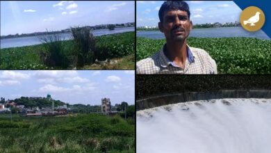 Photo of Lakes in Hyderabad turns into a diseases hub for residents
