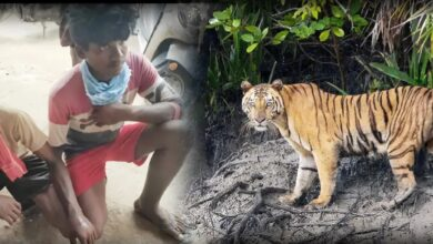 Photo of Two tribal youth come face to face with a tigress in Asifabad