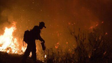 Photo of 3 billion animals killed, displaced in Aus wildfires