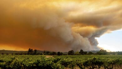 Photo of Massive Northern California wildfires rage on; 1 man dead