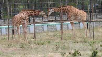 Photo of The closure of  zoo due to Corona brings relief for animals