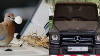 Photo of Dubai Crown Prince abandons his Mercedes as bird build's nest on it