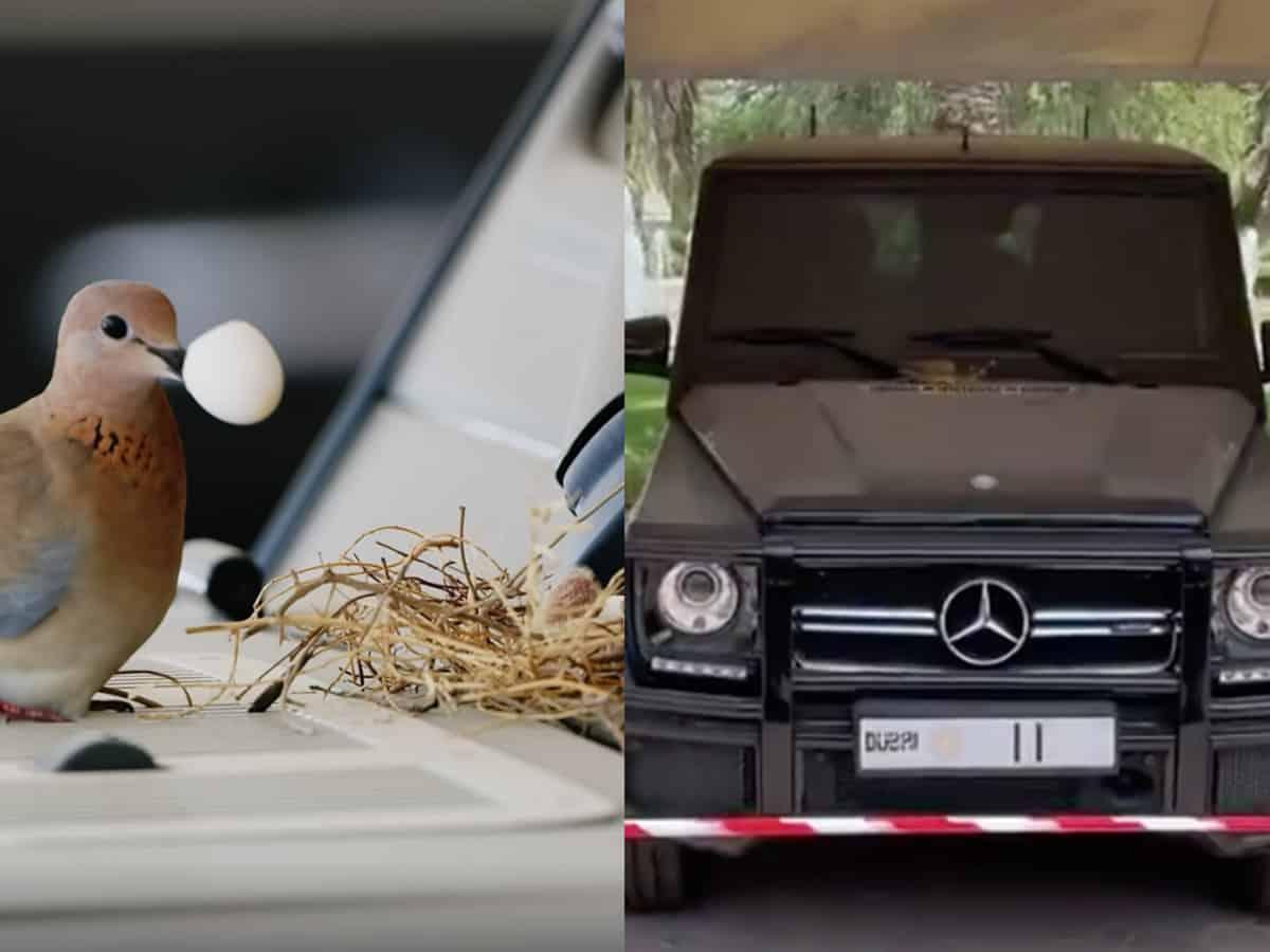 Dubai Crown Prince abandons his Mercedes as bird build's nest on it