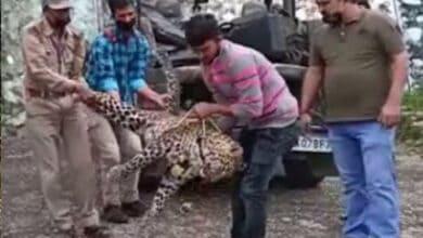 Uttarakhand: Leopard that had killed child shot dead