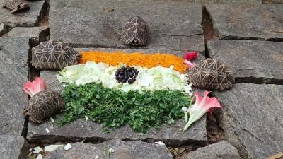 I-Day theme-based food served to Bengaluru zoo animals