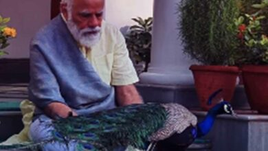 Photo of PM posts video of him feeding peacocks