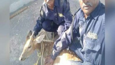 Photo of Six deers, blackbucks trapped in Nizamabad floodwaters, rescued