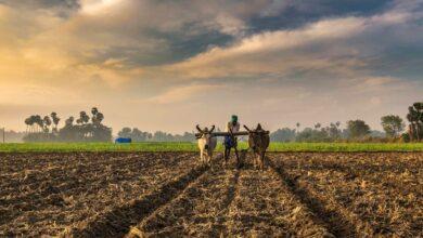 Photo of Odisha MLA toils on his farmland, garners praise from VP, Patnaik