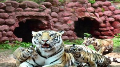Photo of Hyd: Gland Pharma adopts 27 animals at Nehru Zoological Park