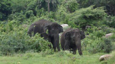 """Photo of Nehru Zoological Park  celebrated """"World Elephant Day"""""""