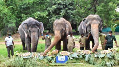 Photo of Nehru Zoological Park celebrates World Elephant Day