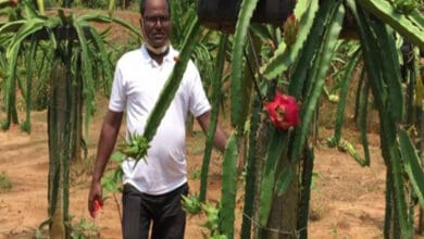 Photo of Tripura horticulturist cultivates dragon fruit, sells at Rs 400/kg