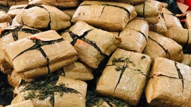 Photo of Ganja worth Rs 3.56 crore seized by DRI