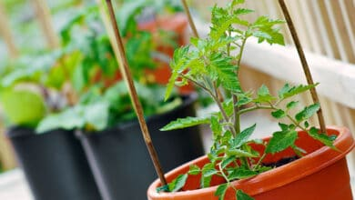 5 tips for easy home gardening