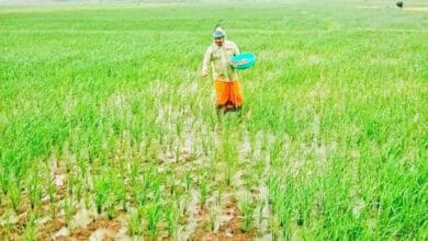 Photo of Odisha MLA toils on his farmland during COVID times; hailed