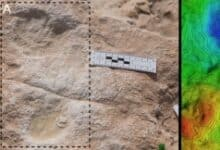 Photo of 120,000-year-old human footprints found in Saudi Arabia