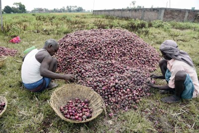 Onion growers, politicians shed tears over export ban