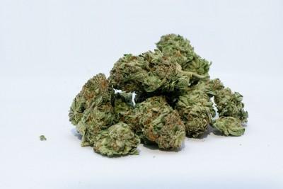 3 peddlers held, 59 kg cannabis seized in Gurugram