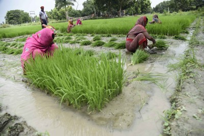 All states allowed to begin paddy procurement: Food Ministry