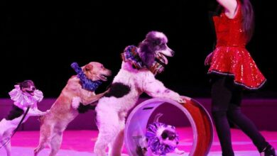Photo of France to ban use of wild animals in circuses
