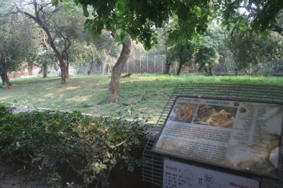 Closure of zoo due to Corona brings relief for animals