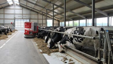 Photo of Mega dairy farm to be set up in Hyderabad outskirts
