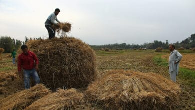 Photo of Local farmers kick off paddy harvesting in Kashmir